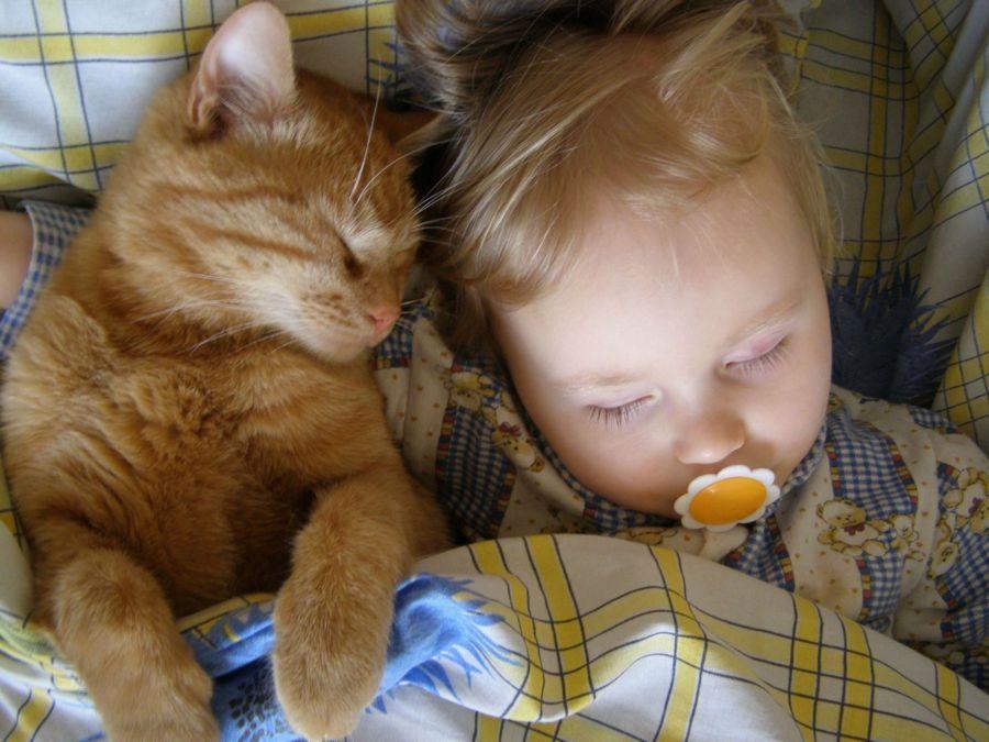 相反,虐待小动物的孩子,则会受到各种教育:轻则受到批评或训导,重则